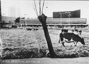 1969_Schouwburgplein met koeien ansichtkaart - Wim Gijzen